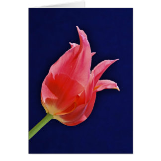 Tropical Punch Tulip Card