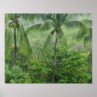 Tropical rainforest 2 poster