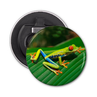 Tropical rainforest green red-eyed tree Frog