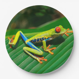Tropical rainforest green red-eyed tree Frog 9 Inch Paper Plate