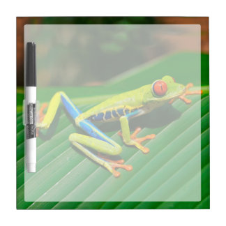 Tropical rainforest green red-eyed tree Frog Dry-Erase Boards