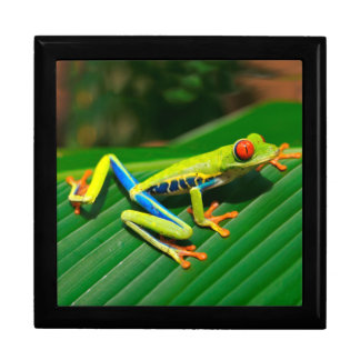 Tropical rainforest green red-eyed tree Frog Gift Box