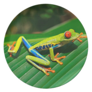 Tropical rainforest green red-eyed tree Frog Party Plate