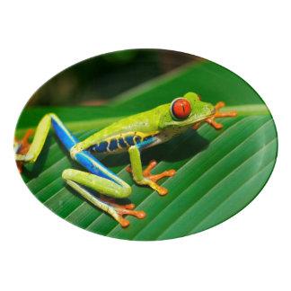 Tropical rainforest green red-eyed tree Frog Porcelain Serving Platter