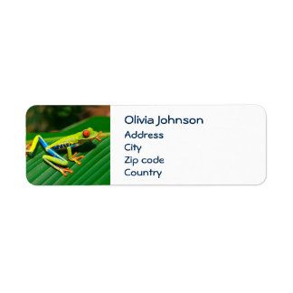 Tropical rainforest green red-eyed tree Frog Return Address Label