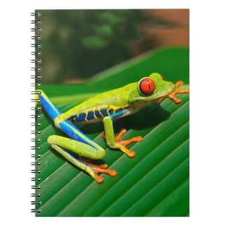 Tropical rainforest green red-eyed tree Frog Spiral Notebook