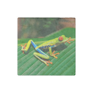 Tropical rainforest green red-eyed tree Frog Stone Magnet