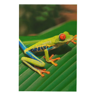 Tropical rainforest green red-eyed tree Frog Wood Wall Art