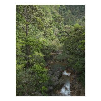 Tropical Rainforest, Miravalles, Cordillera de Postcard