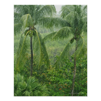 Tropical rainforest posters