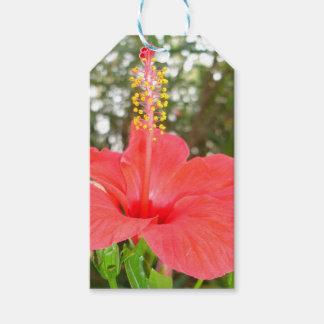 Tropical Red Hibiscus Rose Mallow