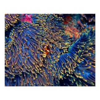 Tropical Sea Coral Poster