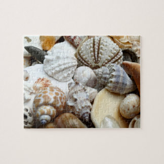 Tropical Seashells Photography Puzzle