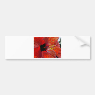 Tropical stylized red hibiscus flower bumper sticker