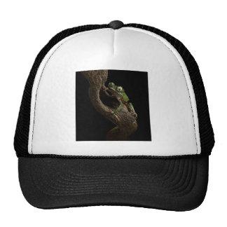 tropical tree frog mesh hat