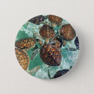 Tropical Turtles (Kimberly Turnbull Photography) 6 Cm Round Badge
