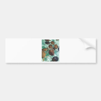 Tropical Turtles (Kimberly Turnbull Photography) Bumper Sticker