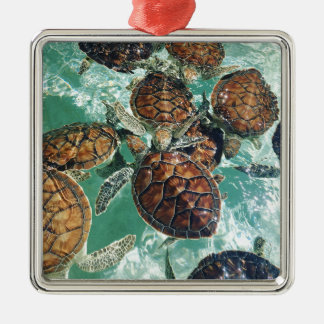 Tropical Turtles (Kimberly Turnbull Photography) Metal Ornament
