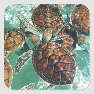 Tropical Turtles (Kimberly Turnbull Photography) Square Sticker