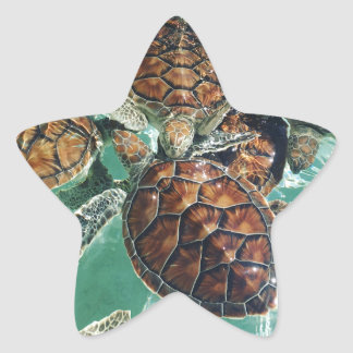Tropical Turtles (Kimberly Turnbull Photography) Star Sticker