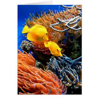 Tropical Undersea Coral Card