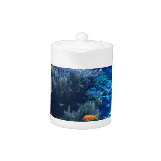 Tropical underwater fish