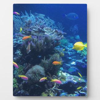 Tropical underwater fish plaque