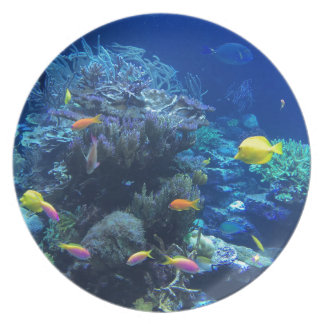 Tropical underwater fish plate