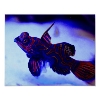 Tropical Underwater Fish With Glowing Colors Poster