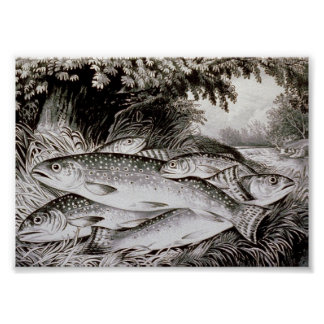 Trout Fishing Vintage Image Poster