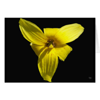 Trout Lily Blank Greeting Cards