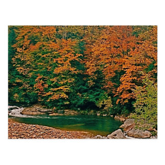 Trout Stream, West Virginia Postcard
