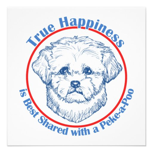 True Happiness with a Peke-a-Poo Announcements