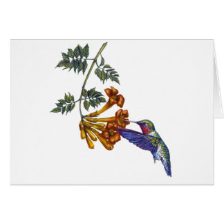 Trumpet Creeper Ruby Throated Hummingbird Card