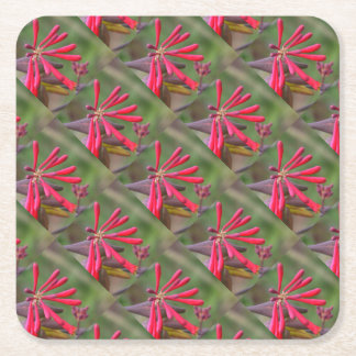 Trumpet Honeysuckle Buds of Coral Woodbine Square Paper Coaster