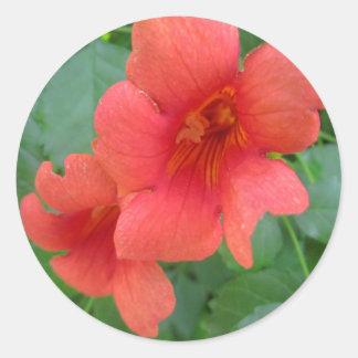 Trumpet Vine Orange Round Sticker