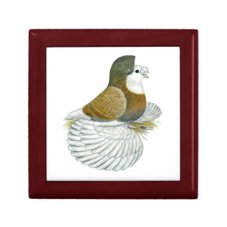 Trumpeter Pigeon AOC Baldhead Gift Box