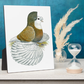 Trumpeter Pigeon AOC Baldhead Plaque