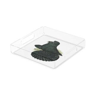 Trumpeter Pigeon Black Acrylic Tray
