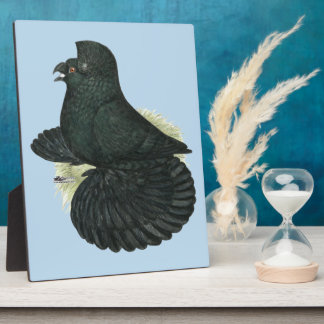 Trumpeter Pigeon Black Plaque