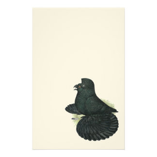 Trumpeter Pigeon Black Stationery