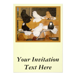 Trumpeter Pigeon Champions Personalized Invite