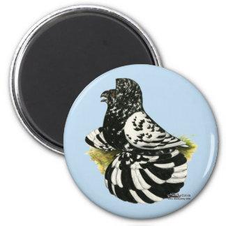 Trumpeter Pigeon Dark Splash Magnet