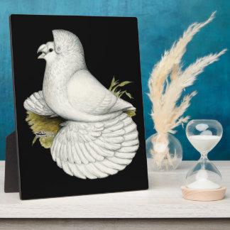 Trumpeter Pigeon White Plaque