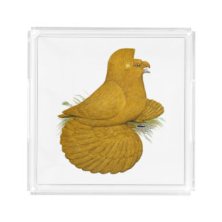 Trumpeter Pigeon Yellow Self Acrylic Tray