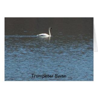 Trumpeter Swan Card