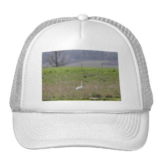 Trumpeter Swan San Juan Island Birthday Sympathy Hat