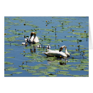 Trumpeter Swans Card
