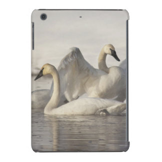 Trumpeter Swans in the Madison River in winter iPad Mini Retina Case