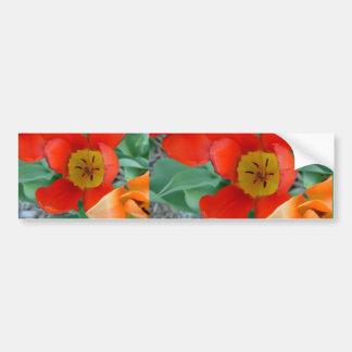 tt sing flowers of linda's on 16th st 027,... bumper sticker